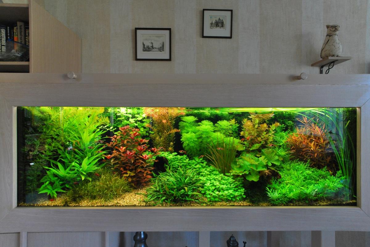 Голландский аквариум фото