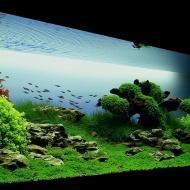 Оформление,установка, обслуживание, акваскейп,aquascape аквариум в Витебске