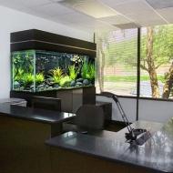 Установка аквариума в Витебске, обслуживание, оформление аквариума